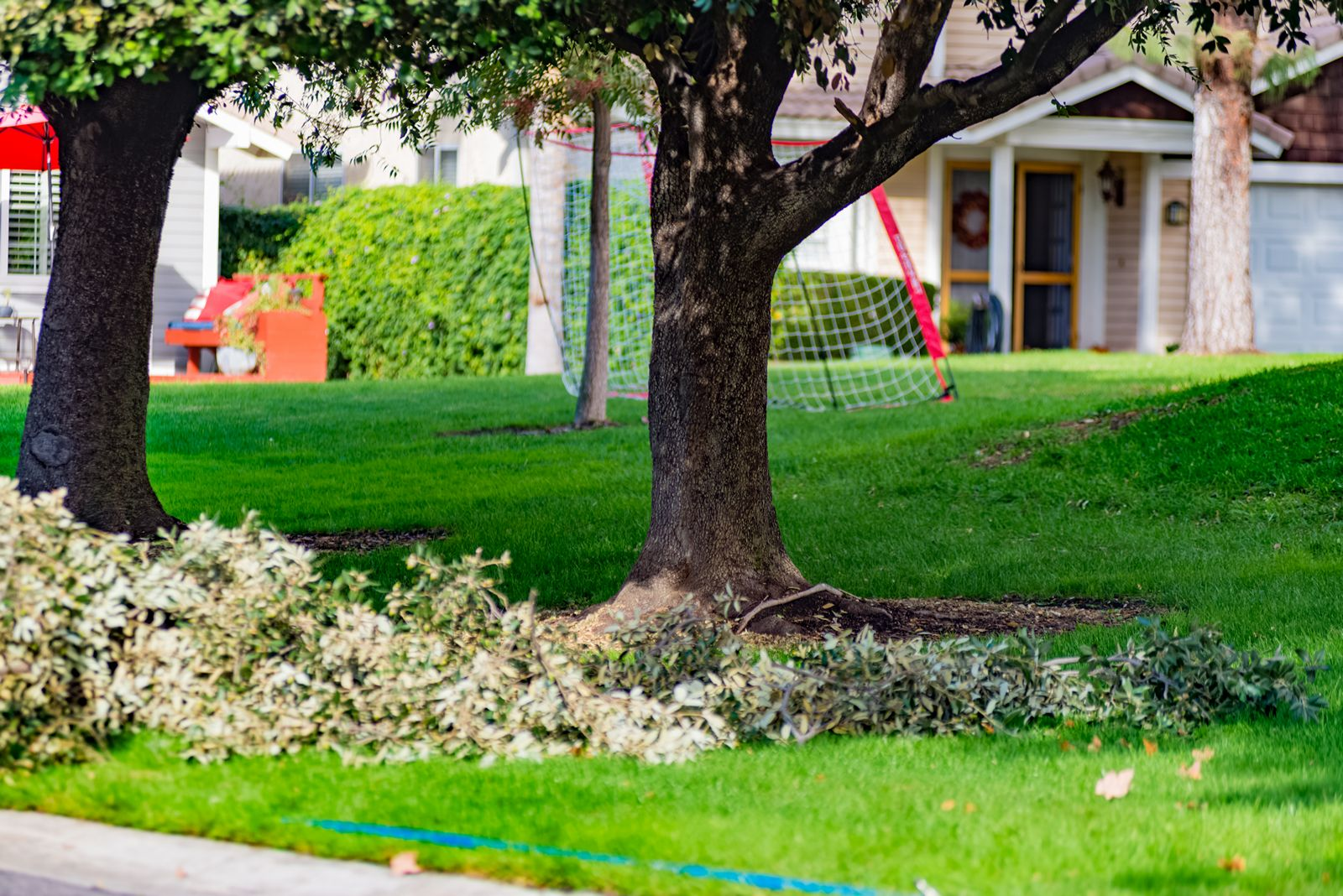 First Certified Arbor Care, Arborist Tree Surgen San Bernardino, CA, Rancho Cucamonga CA
